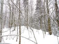 Accident de ski, responsabilité, de l'école de ski , du club de vacances, qui dans son forfait vend les cours de ski